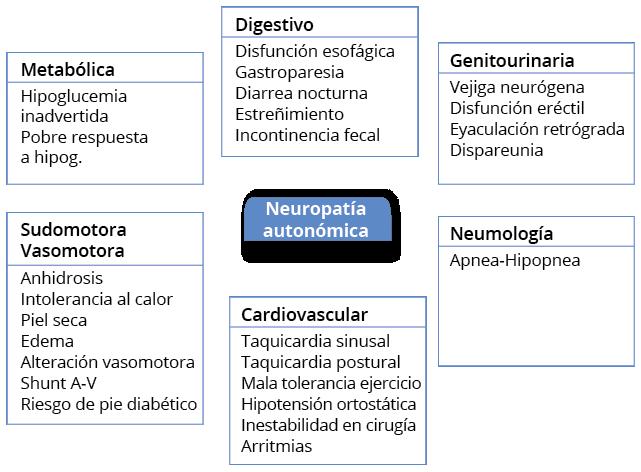 prueba de neuropatia periférica diabetes fisiopatología